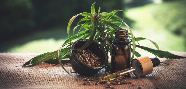 a CBD tincture bottle sits to the right of the frame with a small tilted plant in a pot a CBD tincture dropper is out in front of the plant